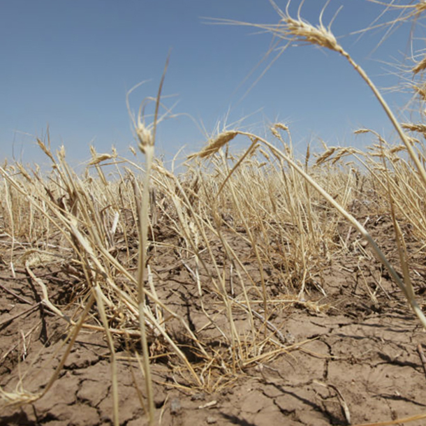 Texas Will Face Driest Conditions Of The Last 1,000 Years