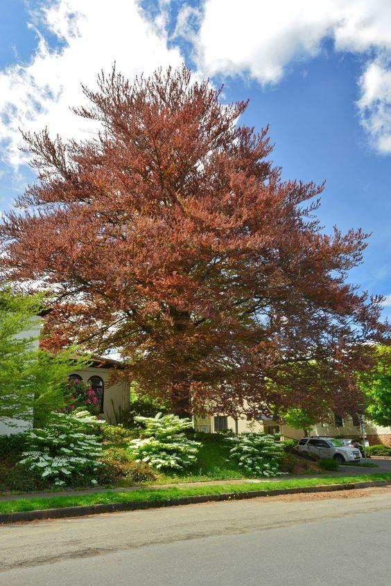 Heritage Tree 173