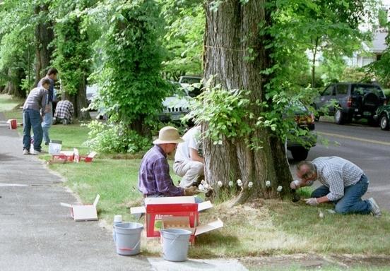 Volunteers help protect elm trees from Dutch Elm Disease.