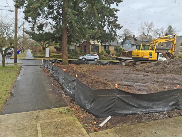 A Douglas-fir tree on a site being developed.