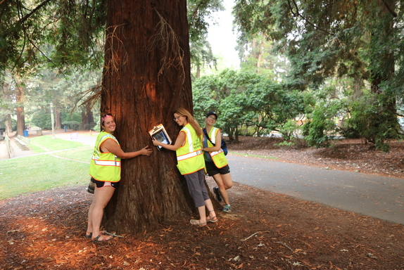 Tree Inventory Volunteers