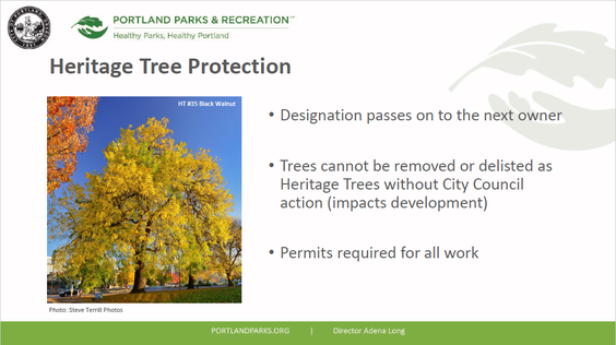 A slide about Heritage Tree Protections from the recent online workshop.