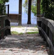 Florida Oceanographic Society guided nature walks