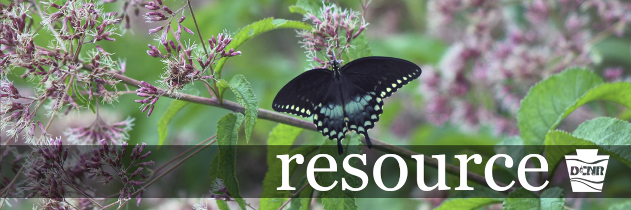 resource header image: A black butterfly with blue and yellow spots sits on a green plant with pink flowers.