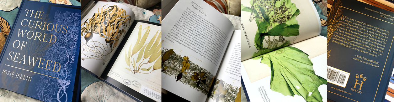 The Curious World of Seaweed Book Page