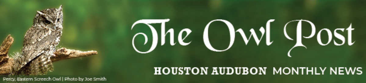 The Owl Post | Houston Audubon Monthly News
