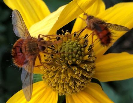 Pollinator Appreciaiton Month Events