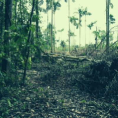 fallen trees in the woods