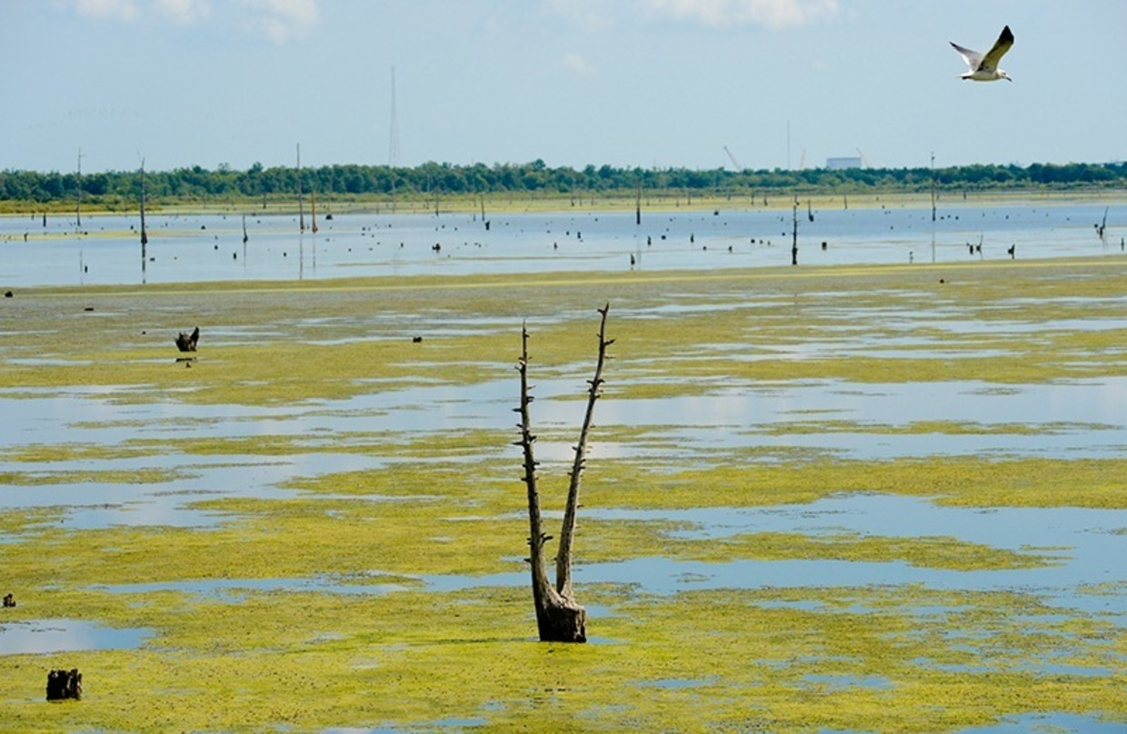 wetlands, climate change