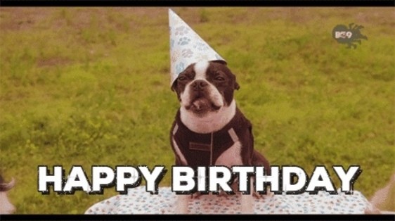 Dog with birthday hat