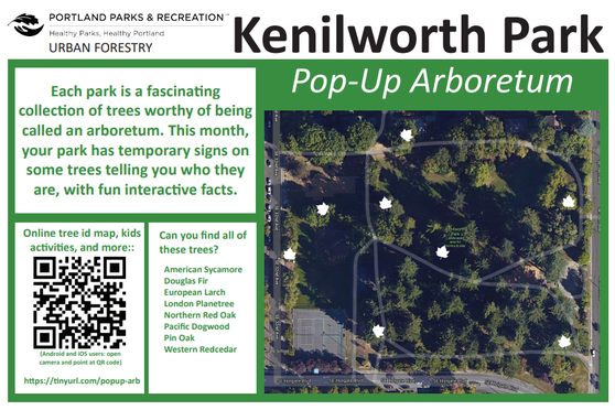 A map of the Pop-Up Arboretum at Kenilworth Park.