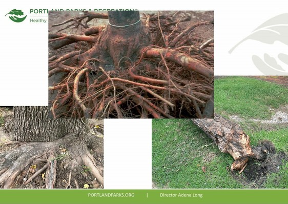 Healthy trees need healthy roots, or else problems can occur.