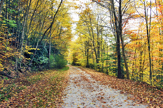 A wooded path lined with yellow trees.