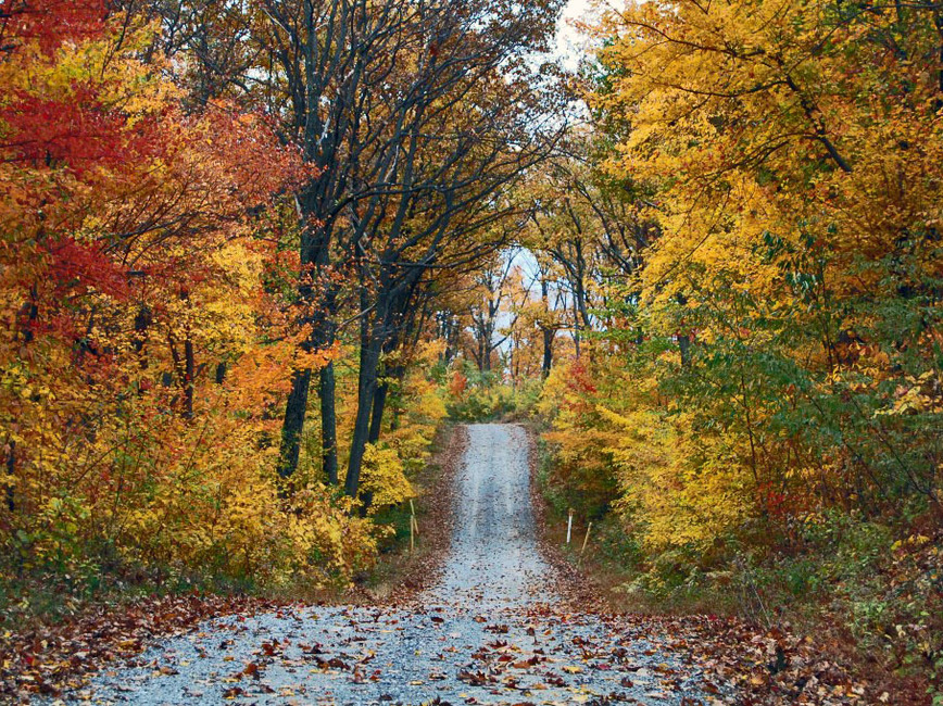 A gravel road extends into a forest full of colorful fall foliage.