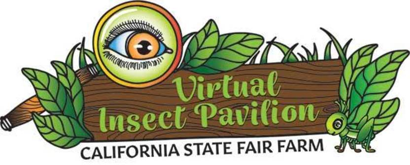 Virtual Insect Pavilion Logo
