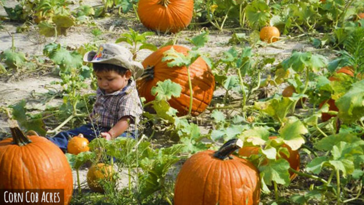 A young boy sitting in Pumpkin Alley at Corn Cob Acres