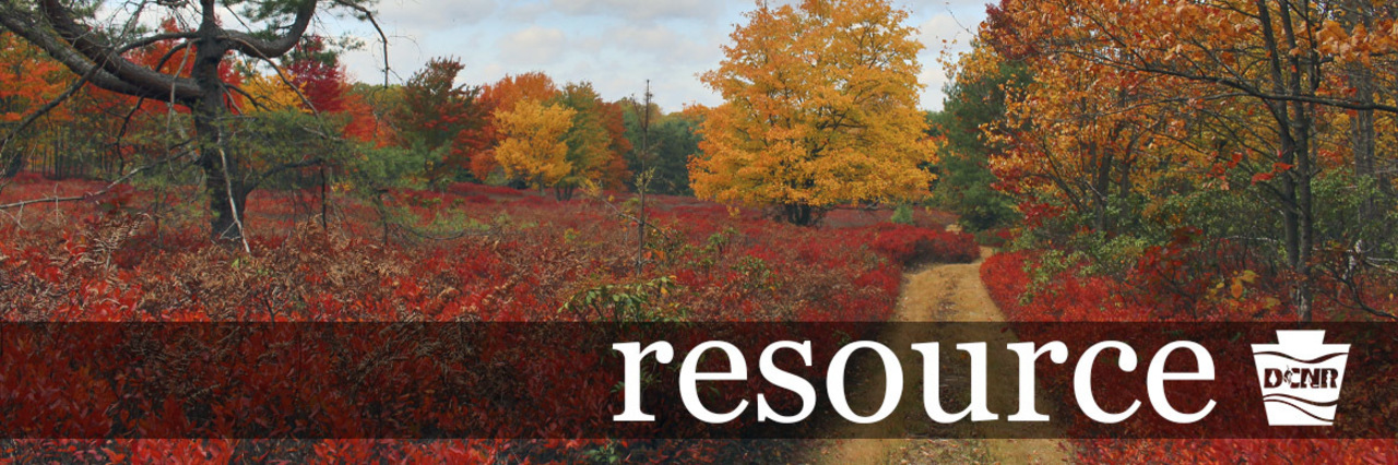 resource header image: Bright red and yellow folliage in a forest clearing.