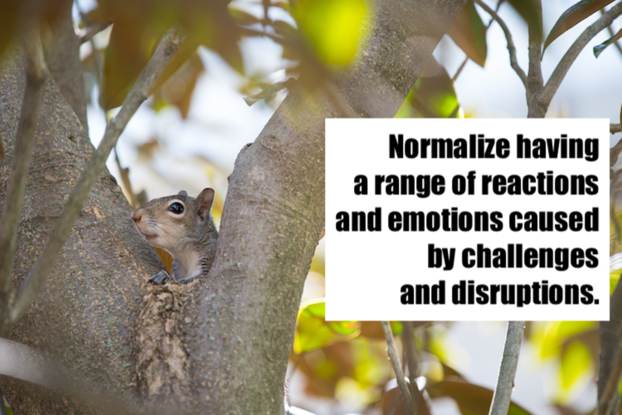 Photo of Squirrel in a tree with text that reads: Normalize having a range of reactions and emotions caused by challenges and disruptions.