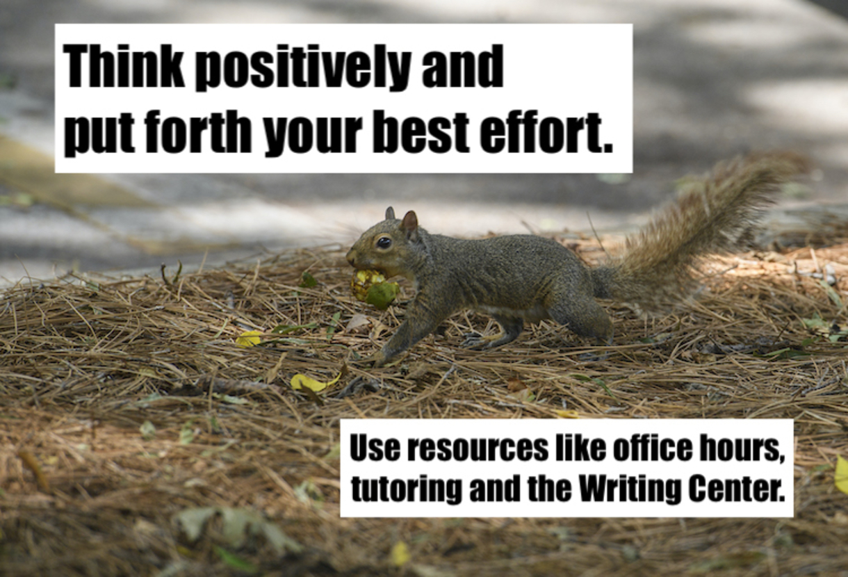 Photo of Squirrel in a tree with text that reads: Think positively and put forth your best effort. Use resources like office hours, tutoring and the Writing Center.