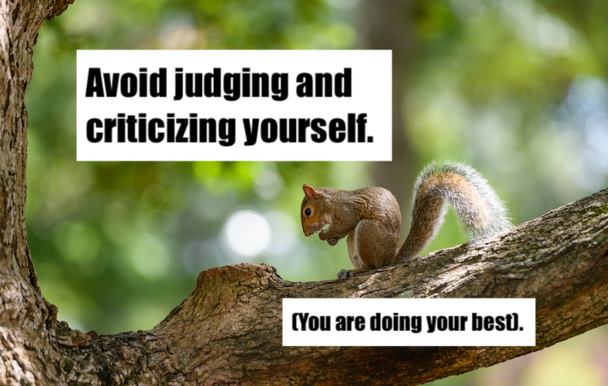 Photo of Squirrel in a tree with text that reads: Avoid judging and criticizing yourself. (You are doing your best.)