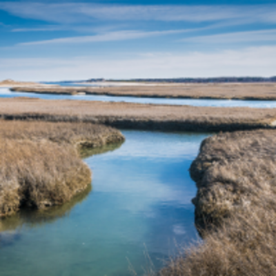 Image of a salt marsh