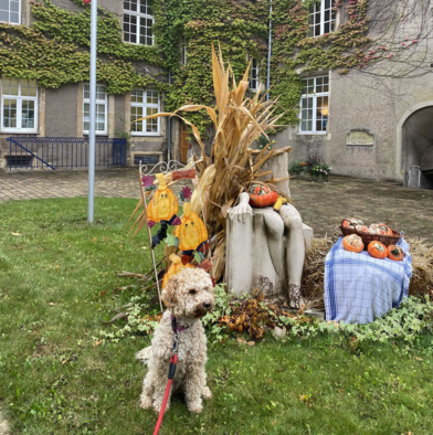 Hazel the dog poses in front of an outdoor autumn display