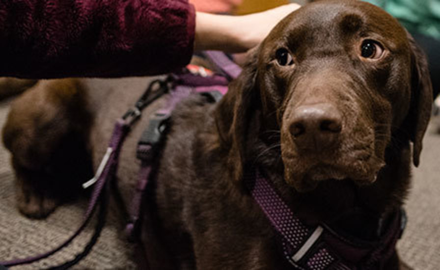 Therapy dog during a visit