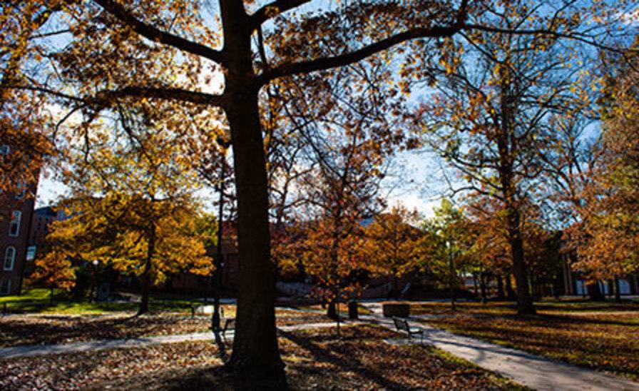 IUP's Oak Grove on a sunny fall day
