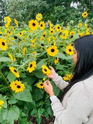 Priya Kodeboina standing in a field of sunflowers