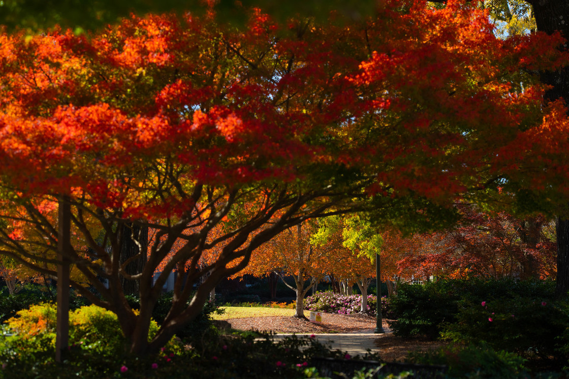 Fall photo from campus with orange and red leaves on the trees