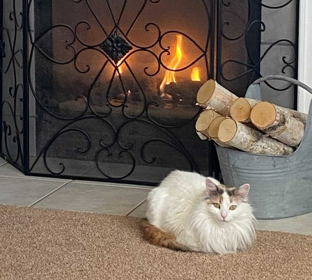 Bella the cat enjoys an afternoon in front of the fireplace