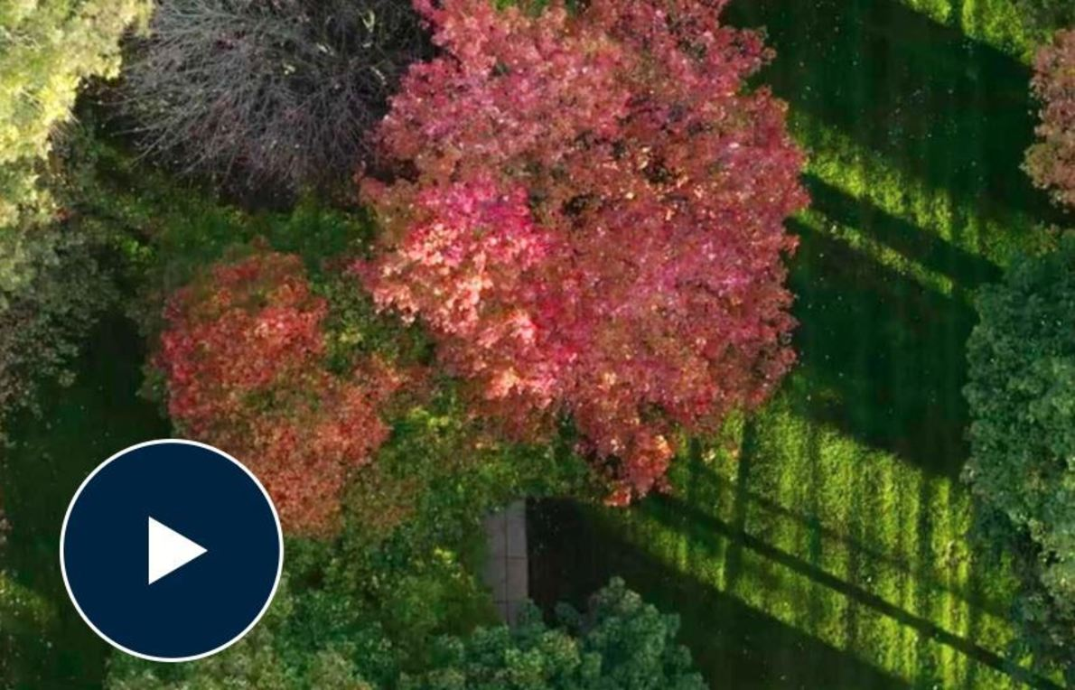 Aerial photo of fall trees on campus with a play video button