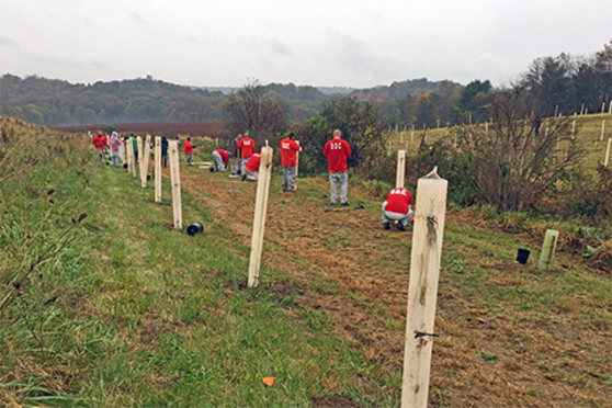 People stand in a hilly field while planting trees.