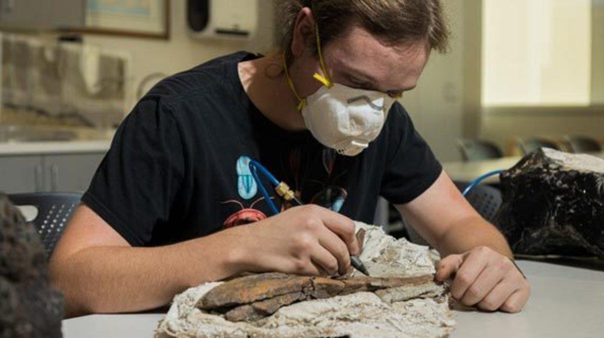 Student Prepares Fossil at SUU