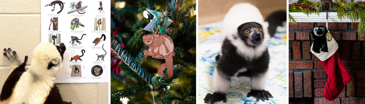 Collage of lemur poster, ornament hanging on a tree, a ruffed lemur painting for enrichment, and a stuffed lemur in a holiday stocking