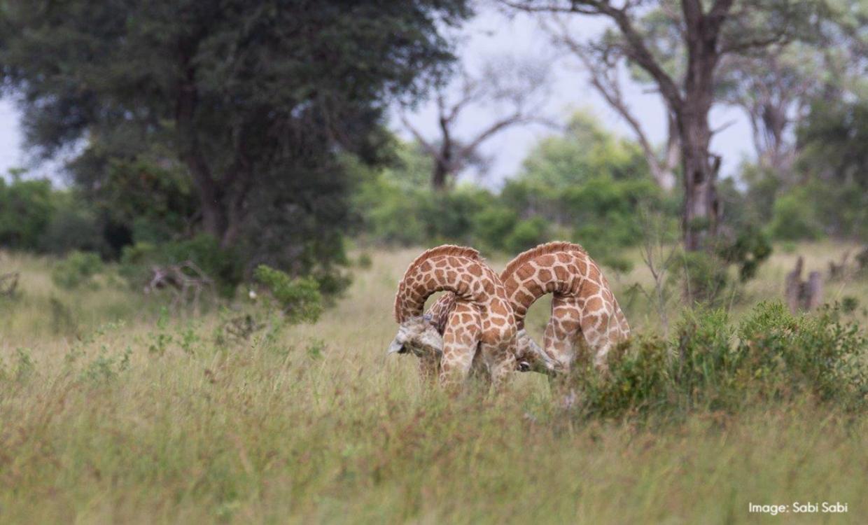 Lion World Travel's Africa Awards