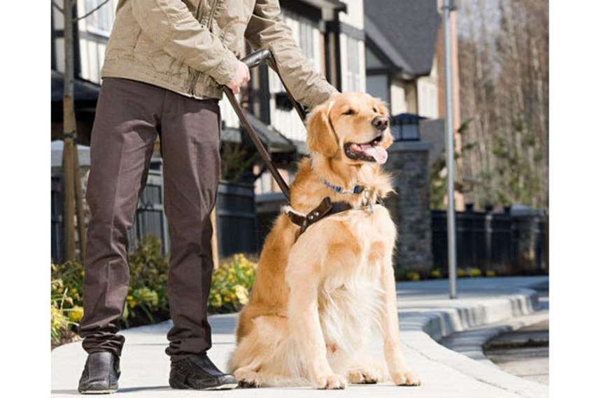 http://www.pax-intl.com/passenger-services/terminal-news/2021/01/08/american-airlines-announces-changes-to-travel-with-emotional-support-and-service-animals-policies/#.X_3PiS_b3OQ