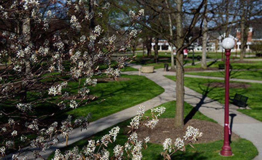 Spring in the Oak Grove