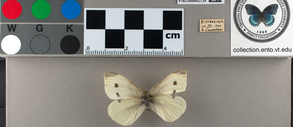 Lab set with preserved butterfly, color diagram, and butterfly stamp