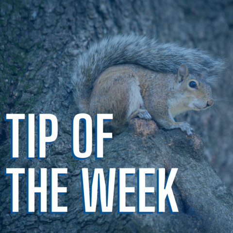 tip of the week in large white text over a photo of a squirrel sitting in a tree