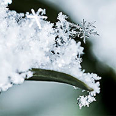 closeup of snowflakes on a blade of grass