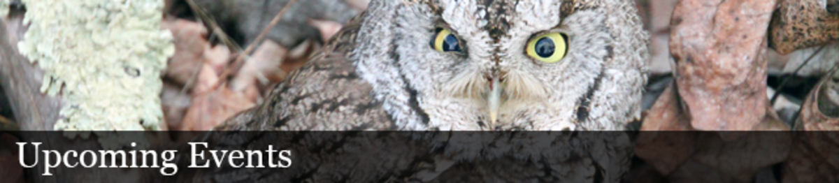An owl on the ground with brown feathers and dark stripes looks up while surrounded by leaves and rocks. Text. Upcoming Events