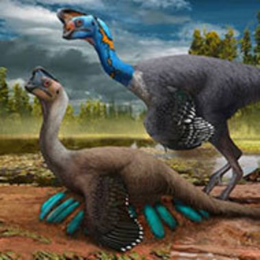 illustration of two oviraptorids, one sitting on nest, by Zhao Chuang