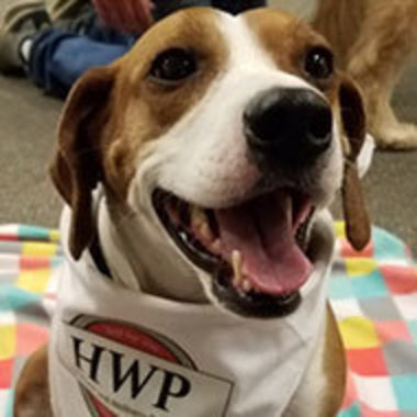 therapy dog Ranger in a vest