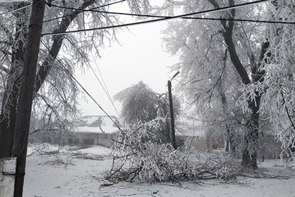Snow and ice covered tree on downed power line