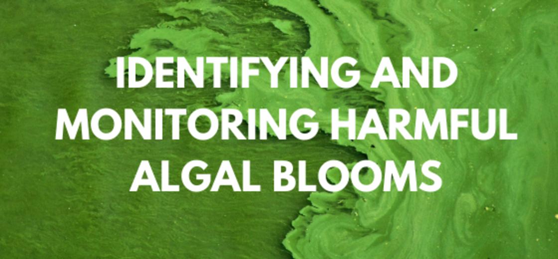 Identifying and Monitoring Harmful Algal Bloom Webinar