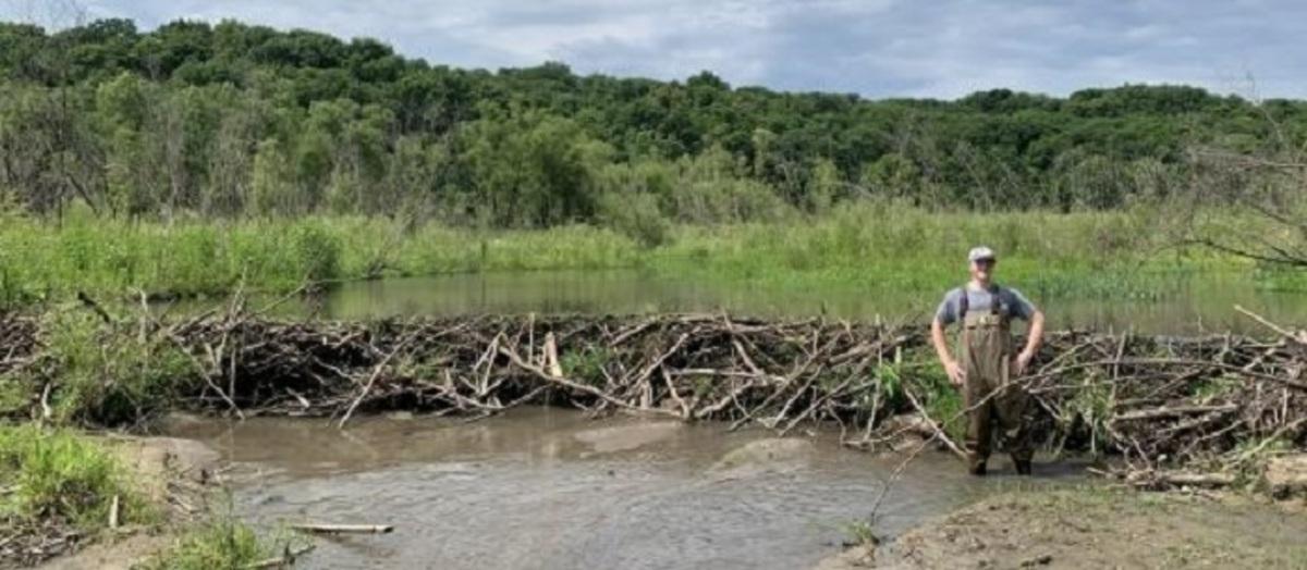 Everett Johnson (ISU Animal Ecology Senior) stands on the downstream side of an active beaver dam.