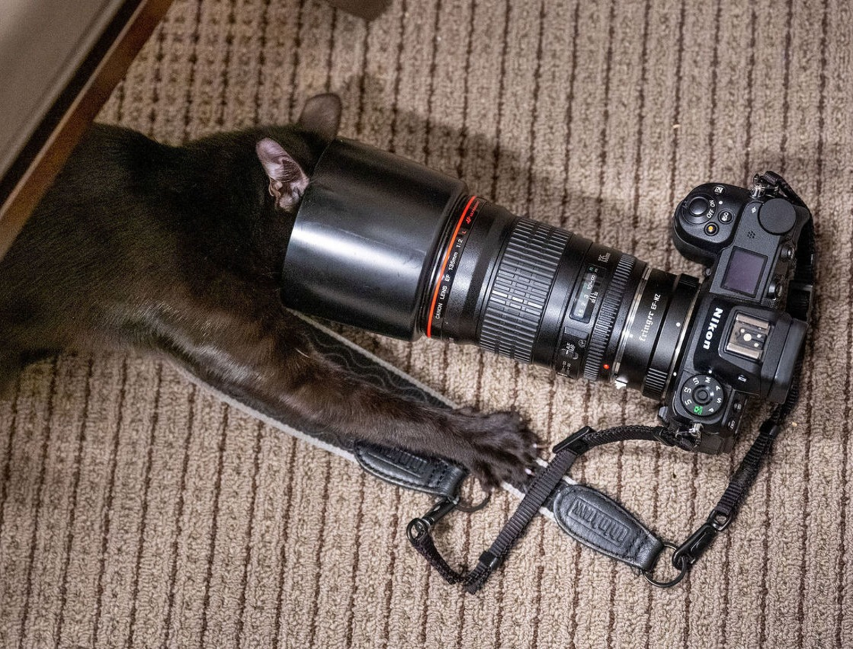 Photo of cat's head in lens of a camera.