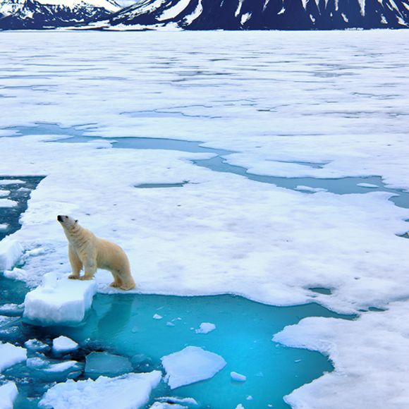 sea ice photo