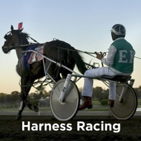 A horse pulling a jocky on a harness